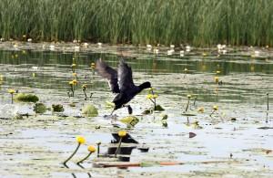 Linnuvaatlus